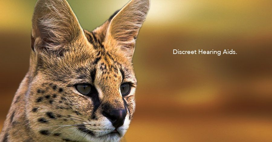 Discreet Hearing Aids